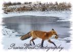 2007_11_11 fox 2