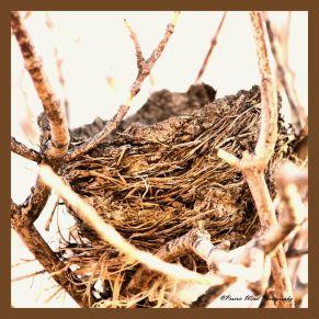 IMG_9245 Nest
