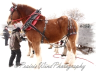 PWP Sleigh Ride0008