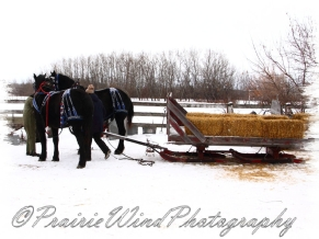 PWP Sleigh Ride0010