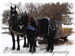 PWP Sleigh Ride0011