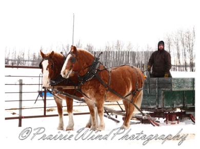 PWP Sleigh Ride0012