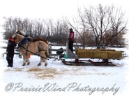 PWP Sleigh Ride0015