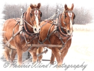 PWP Sleigh Ride0053