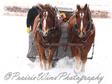 PWP Sleigh Ride0056