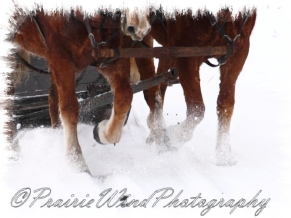 PWP Sleigh Ride0057