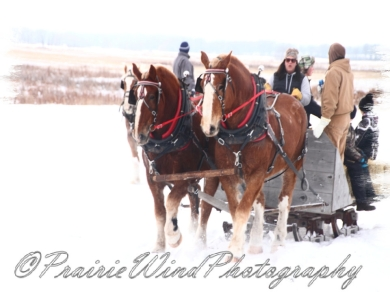 PWP Sleigh Ride0059