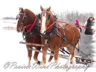 PWP Sleigh Ride0061