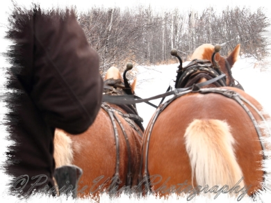 PWP Sleigh Ride0080