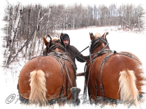 PWP Sleigh Ride0082